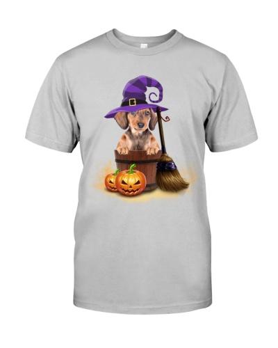 Dachshund hat sand and pumpkin