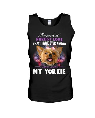 Yorkie Sweetest