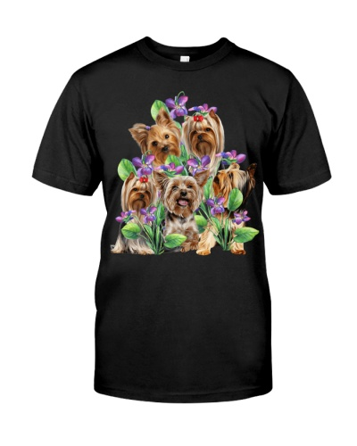 There are five yorkshire terriers