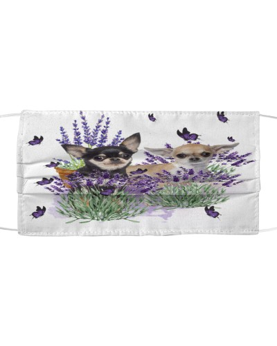 Chihuahua with lavender