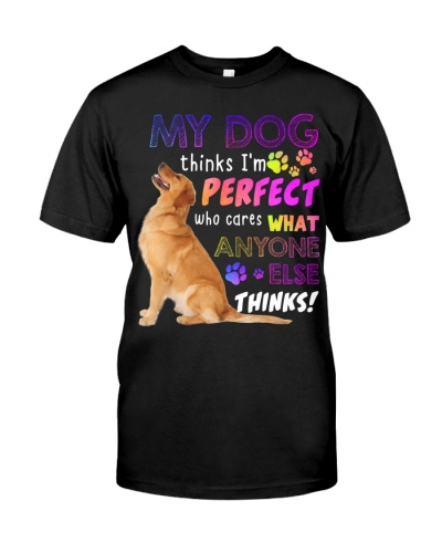 Golden Retriever Thinks I Am Perfect