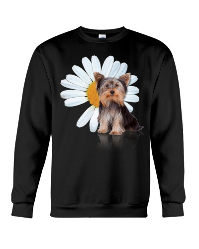 Yorkshire terrier and a daisy