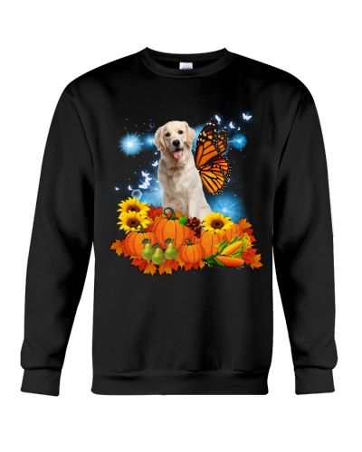 Angle Golden retrieve in thankgiving day