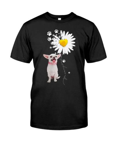 Fn 2 chihuahua daisy my sunshine