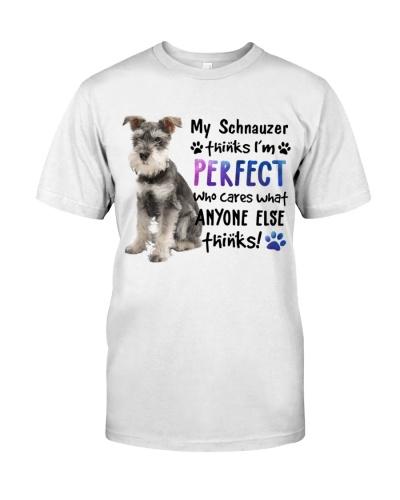 Schnauzer Thinks I'm Perfect