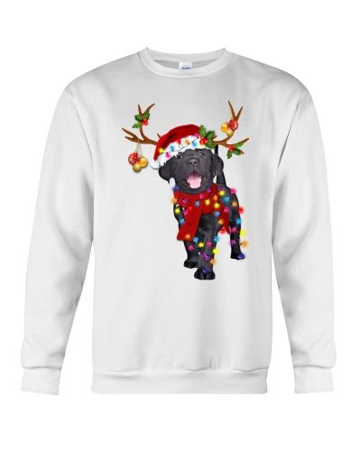 Black labrador retriever gorgeous reindeer