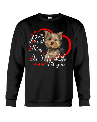 Yorkshire terrier  best thing in my life is you