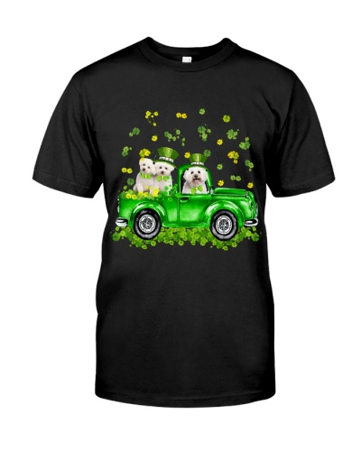Bichon frise Patrick's day car with lucky hat
