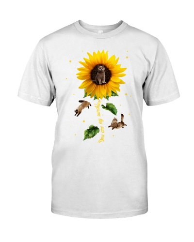 Cats sunflower shines