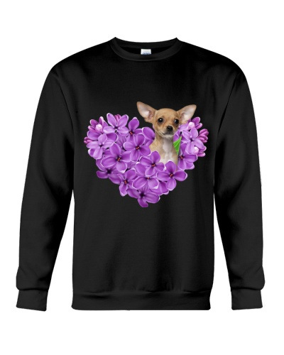 My heart is full by violet color chihuahua