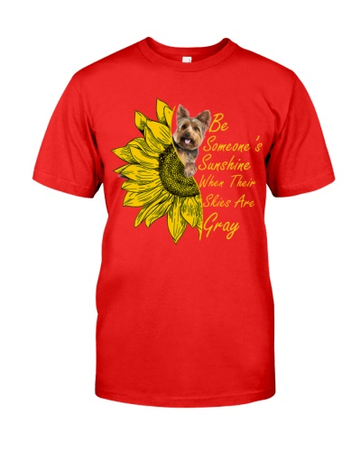 SHN Sunshine skies gray Yorkshire Terrier
