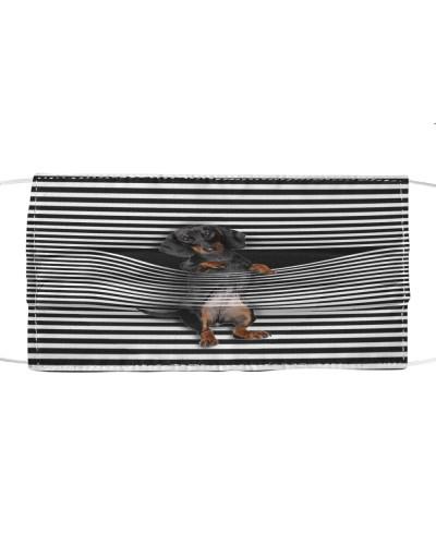 Cute Dachshund Climb Curtain
