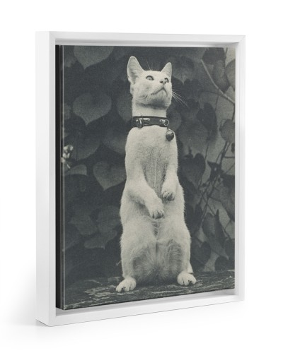 Cat in Eakins's Yard
